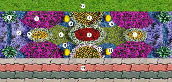 Схема цветника рабатки.