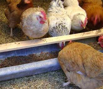 Кормушки для кормления кур.