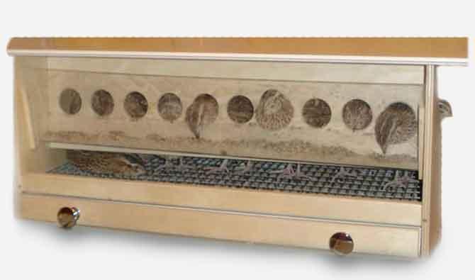 Клетка для перепелов из фанеры.